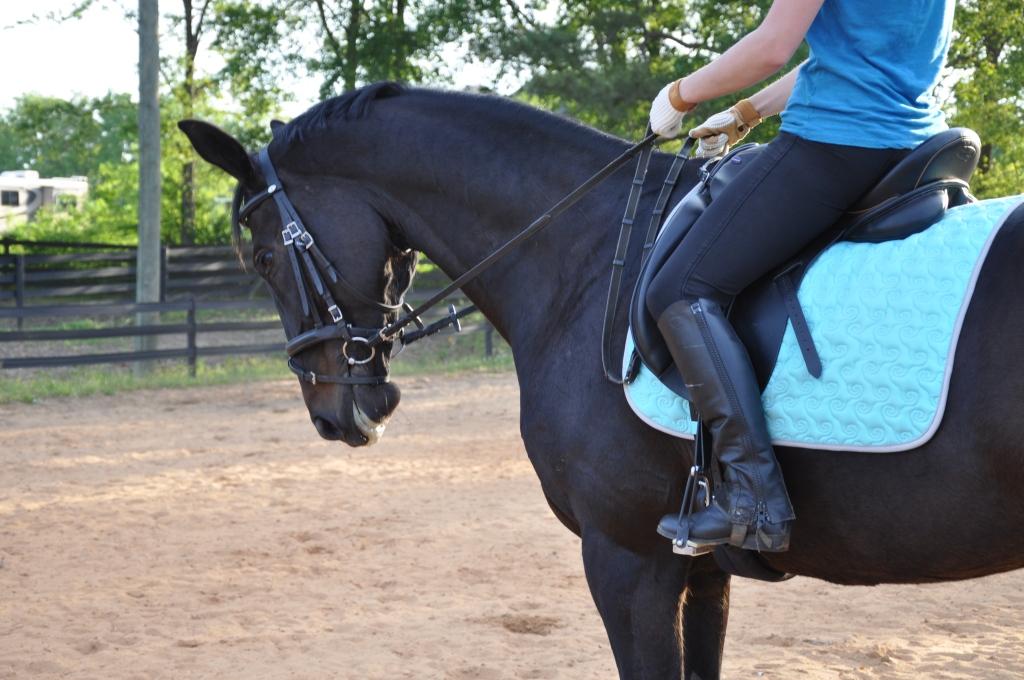 horses-3531